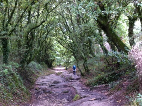 Walking alone through ancient forests in Galicia