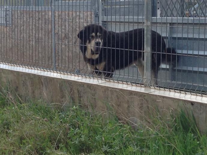 Junkyard Dog outside of Leon